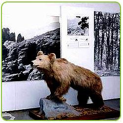 Природонаучен музей - гр. Белорадчик